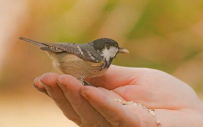 Promovem l'observació d'ocells al Parc del Segre i del Valira de la Seu d'Urgell