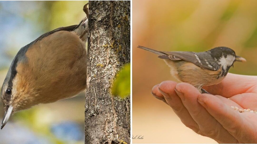 Les menjadores i caixes niu per a ocells i esquirols amplien la seva presència als parcs de la Seu