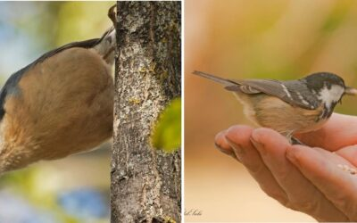 Los comederos y cajas nido para pájaros y ardillas amplían su presencia en los parques de la Seu